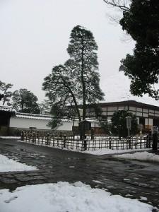 雪の字降松